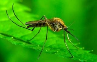 Sivrisinek ısırığında 3 ölümcül hastalık...