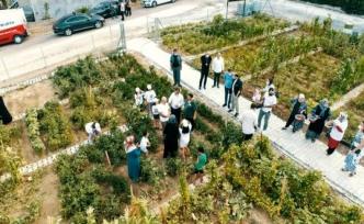 Büyükçekmece'de kent tarımı uygulaması mahallelere yayılıyor