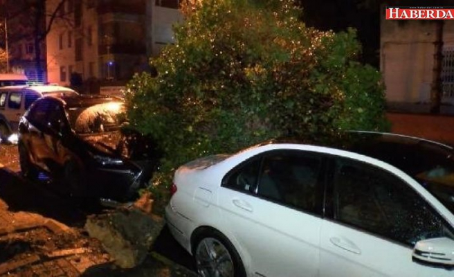 Şiddetli rüzgarla kamyonetin kasası koptu ağaç otomobillerin üzerine devrildi