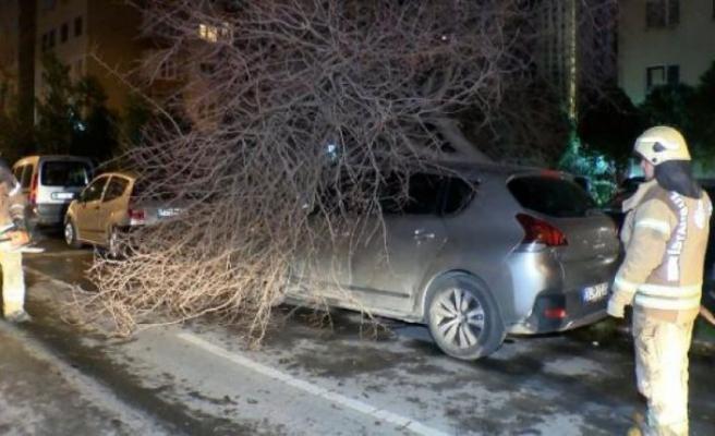 Bakırköy'de ağaç otomobilin üzerine devrildi