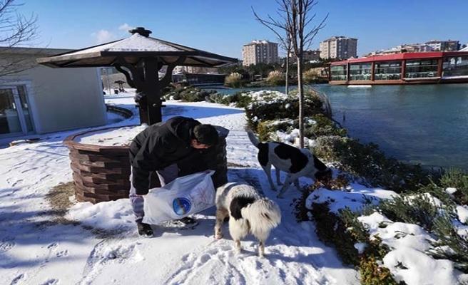 Büyükçekmece Belediyesi soğuk havada sokak hayvanlarını yalnız bırakmıyor