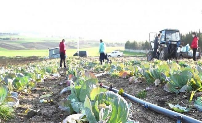Silivri Belediyesi'nden köy pazarı esnafına destek