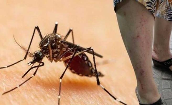 Asya Kaplan Sivrisineği kabusu büyüyor: Yağışlı bölgelere dikkat!