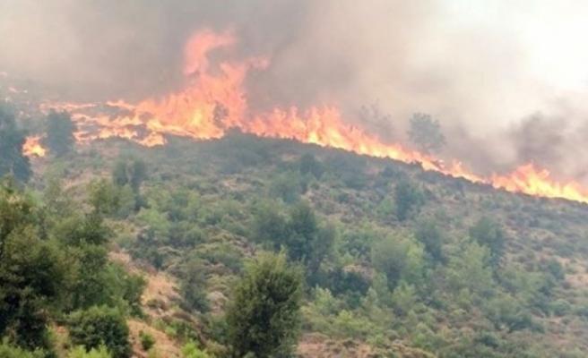 14 gün süren Köyceğiz yangını kontrol altına alındı