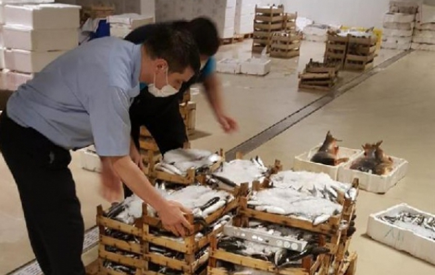 Gürpınar Su Ürünleri Hali'ndeki denetimde yarım ton balığa el konuldu
