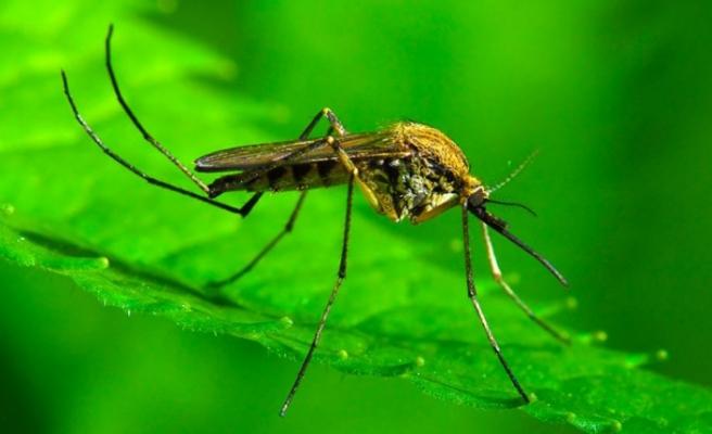 Sivrisinek ısırığında 3 ölümcül hastalık riski: Bu belirtilere dikkat!