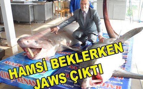 HAMSİ BEKLERKEN JAWS ÇIKTI