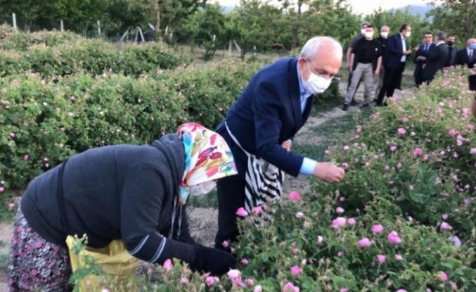 Kılıçdaroğlu, emekçilerle birlikte gül topladı