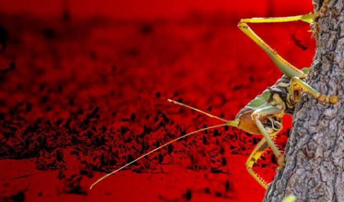 Şimdi de böcek alarmı! İklim değişikliği yer kabuğunu da etkiledi