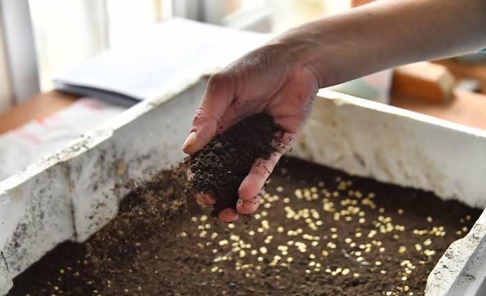 Ata tohumları tekrar toprakla buluşmaya başladı