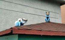 Küçükçekmece'de kediler 'Şirinler'e döndü