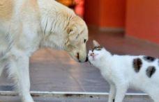 İBB'den SemtPati projesi: Sokak hayvanlarının ihtiyaçları karşılanacak