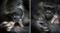 Vahşi doğanın sevimli yüzleri