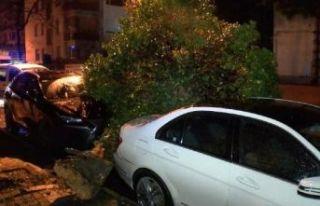 Şiddetli rüzgarla kamyonetin kasası koptu ağaç...