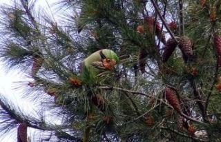 Avcılar'da şaşırtan görüntü... Ağaçlar...