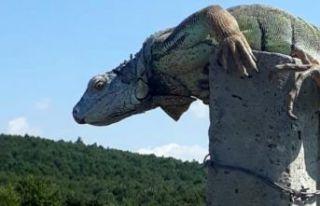 Çatalca'da görülen dev iguana, bakanlık yetkililerini...