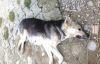 Silivri'de köpek katliamı!